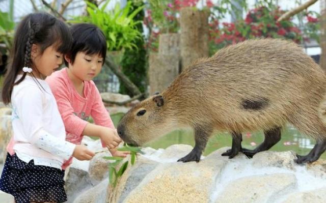 Japonské deti a kapybara močiarna