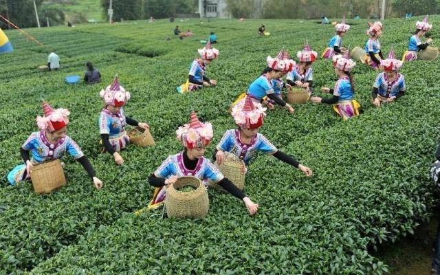 Dívky sbírají čaj