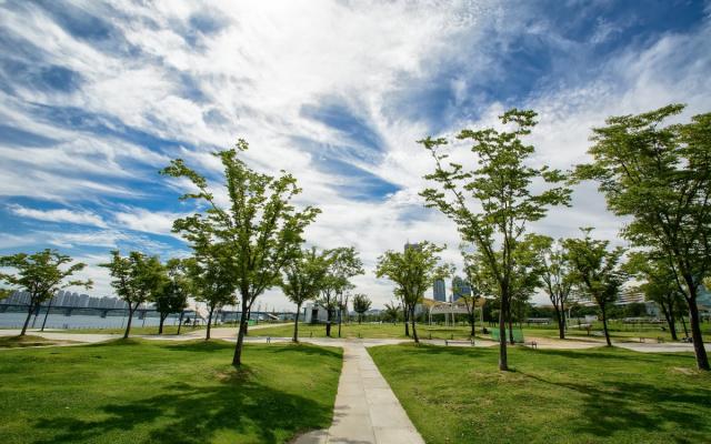 Stromy v Soulu