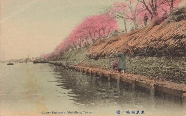 Cherry blossom at Mukojima, Tokyo (1907 - 1918)