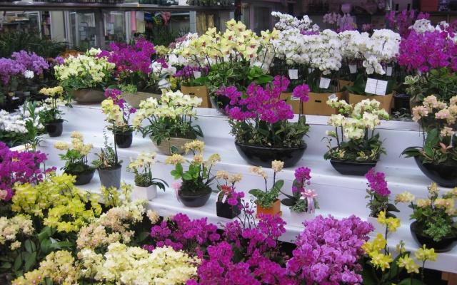Květiny na trhu v Yangjae