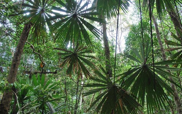 Palmy v parku Berbak