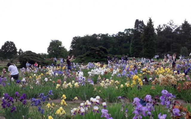 Japonský den v Průhonickém parku