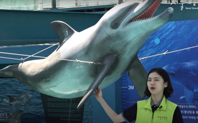 Dolphin Story Hall