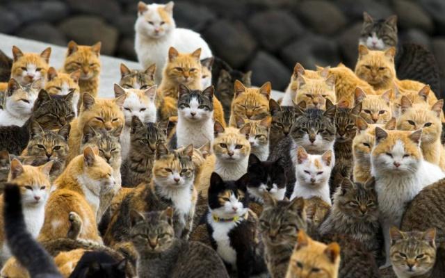 Kočky z ostrova Aoshima