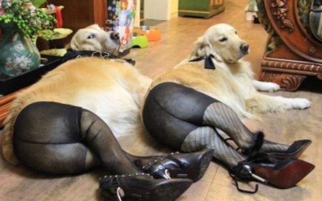 Psi navlečení do punčocháčů