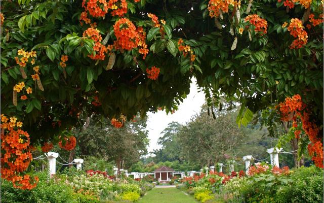 Botanická zahrada v Penangu