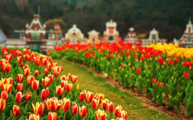 Festival tulipánů v Everlandu