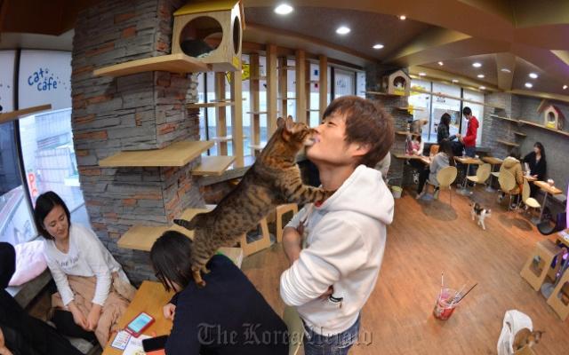 Zákazník mazlící se s kočkou